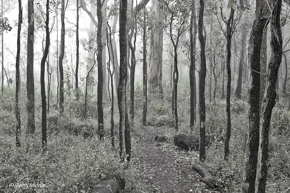 Misty Porongurups forest.jpg