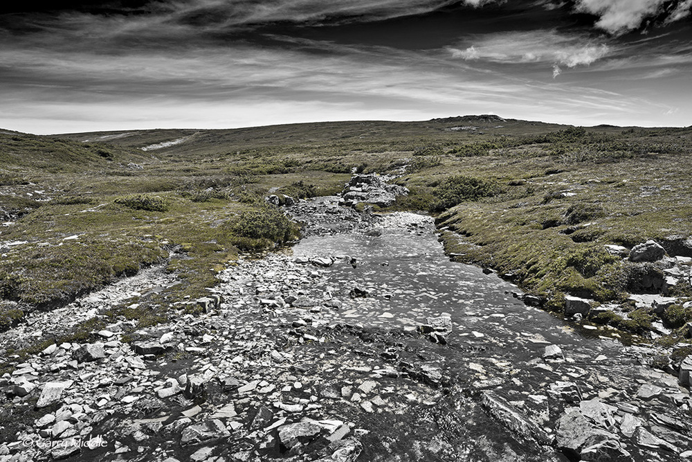 Small_Copyright_Plateau Creek B&W&Green.jpg