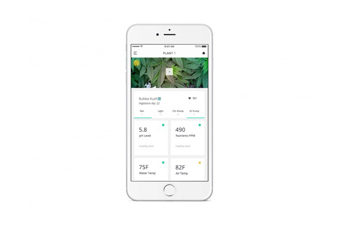 leaf-plug-n-plant-cannabis-home-growing-system-5.jpg