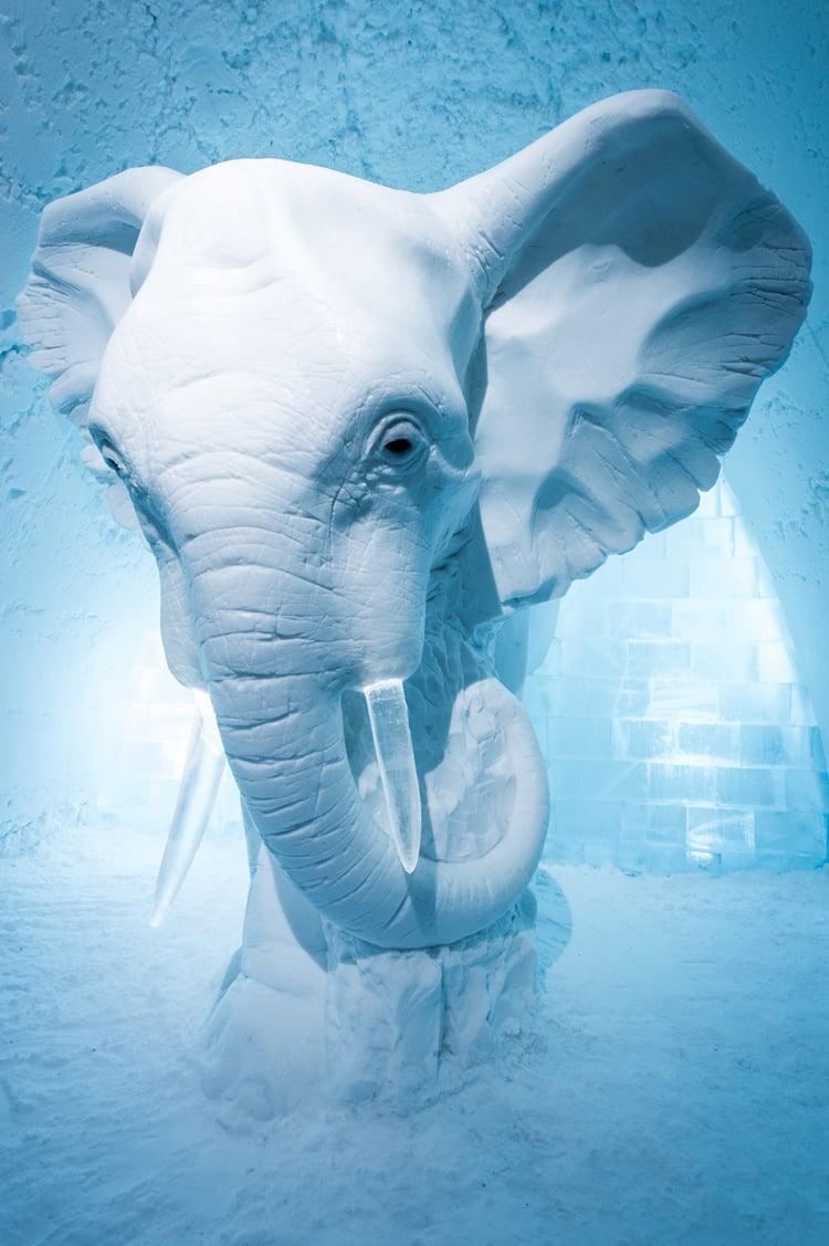 'elephant in the room' by annasofia mååg