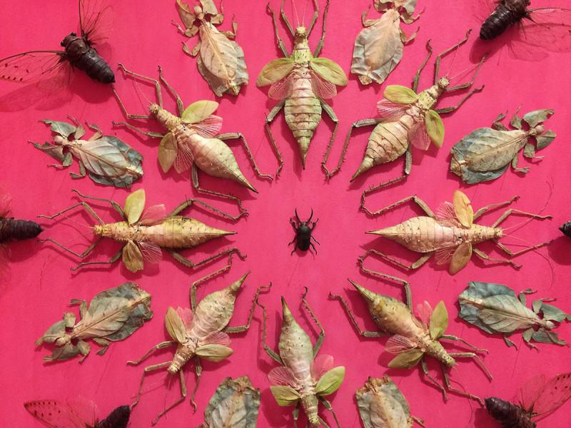jennifer-angus-bugs2-800x600thatsitmag3.jpg