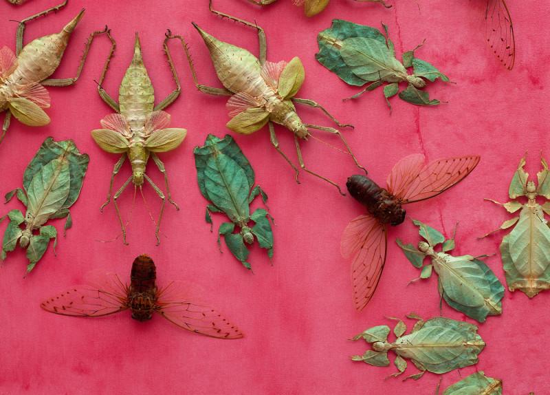jennifer-angus-bugs4-800x574thatsitmag5.jpg