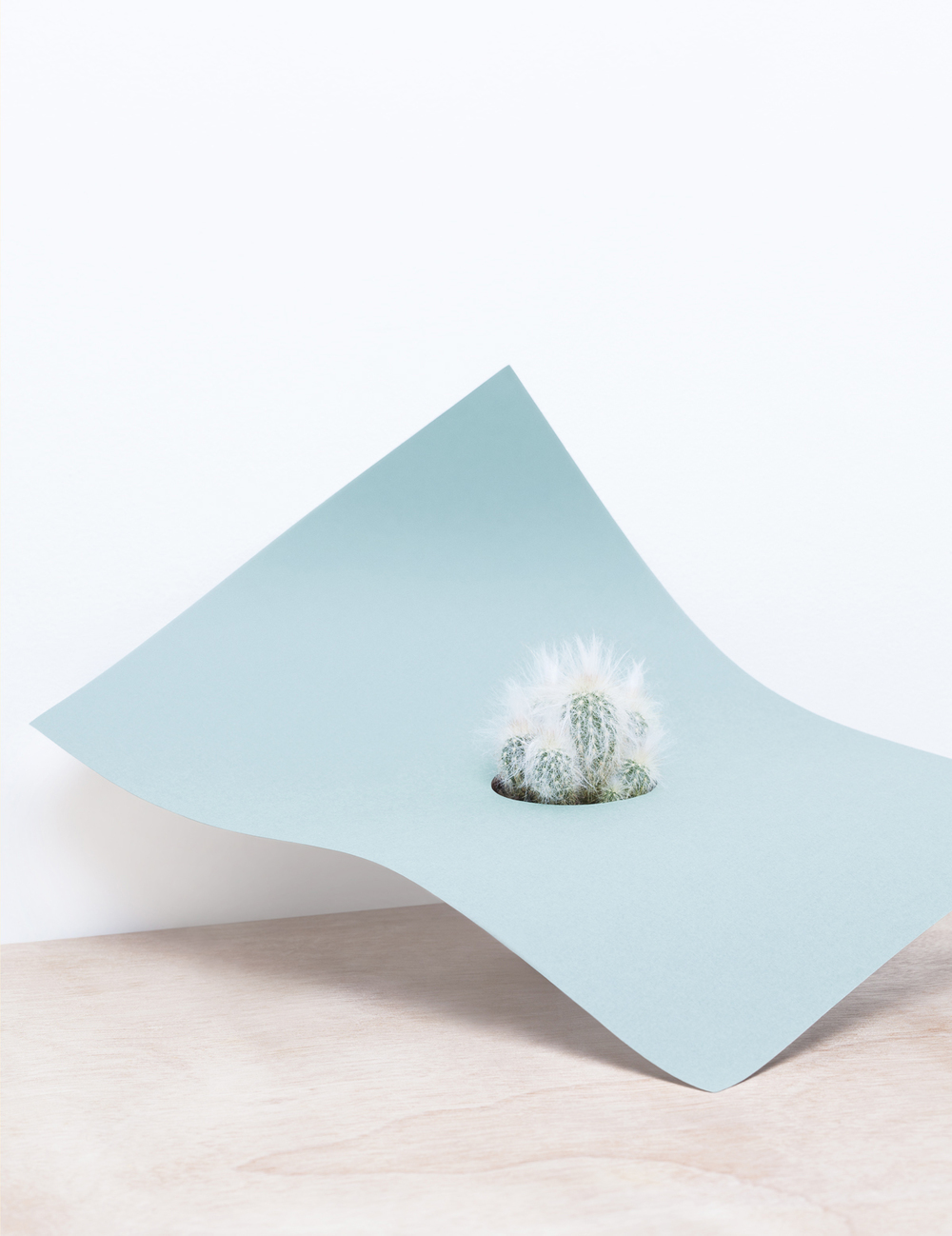 paper-plant-martina-lang-thatsitmag2.jpeg