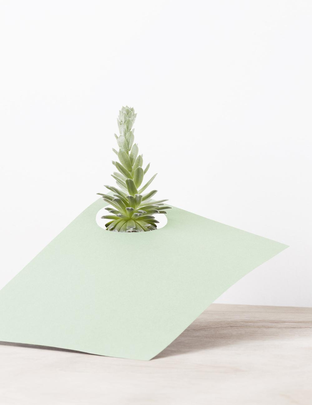 paper-plant-martina-lang-thatsitmag4.jpeg