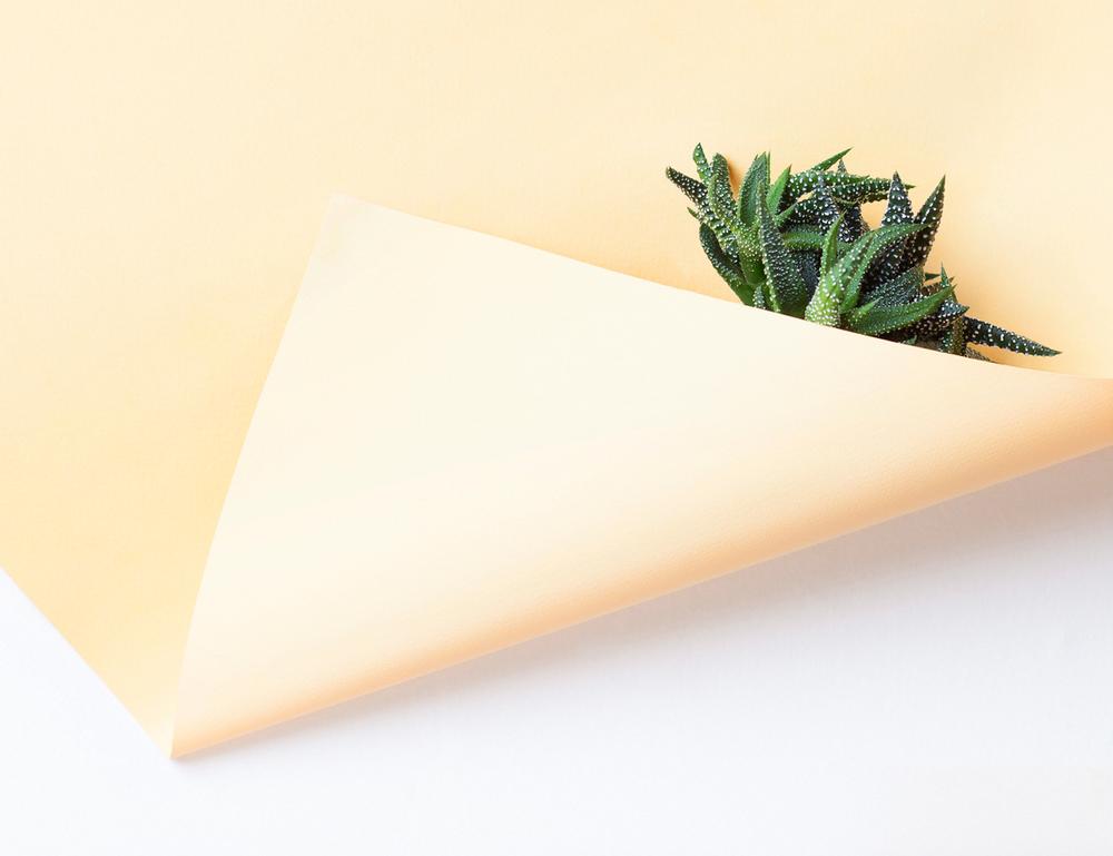 paper-plant-martina-lang-thatsitmag3.jpeg