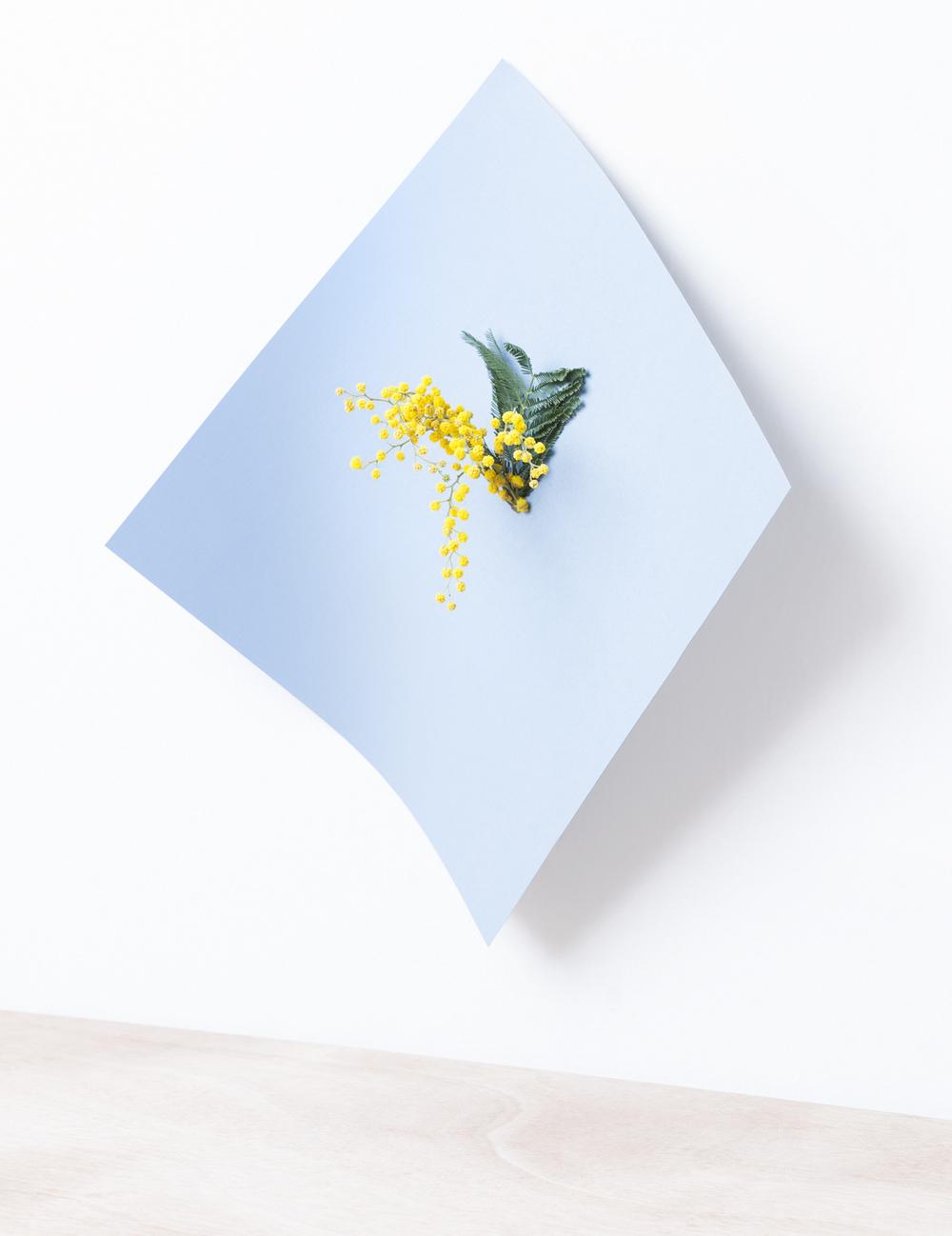 paper-plant-martina-lang-thatsitmag5.jpeg