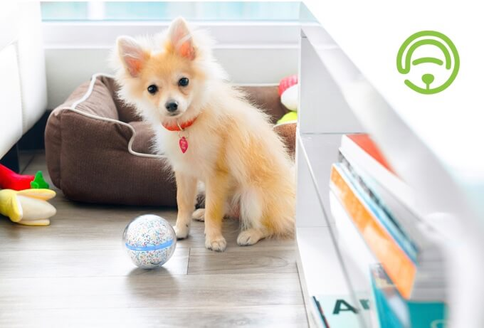 Your pet can still have fun without you-FionaJin-That's it magazine-peppy smart ball-dog.jpg