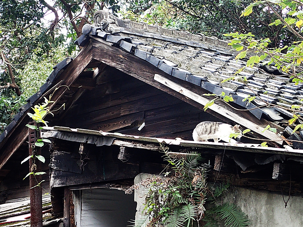 Typical houses in the village. Many are repairable, but a few, like the one to the right, are in a very bad condition.
