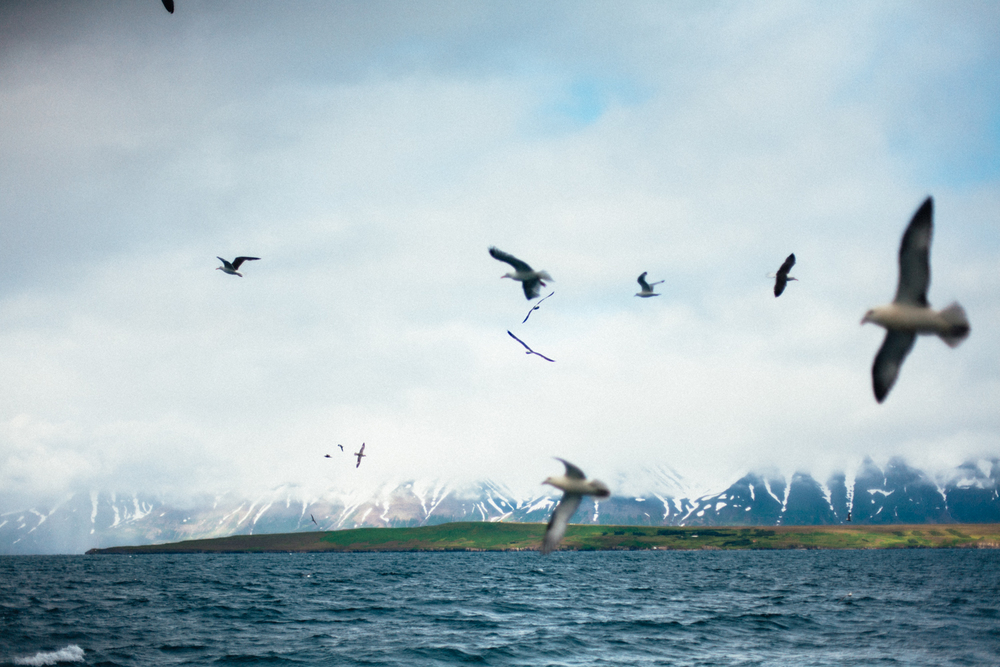 Iceland-Dalvik-7.28-30.14-1093.jpg