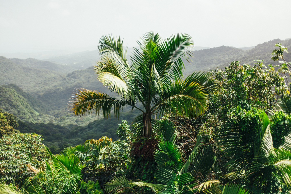 Puerto Rico 10.1-9.14-996.jpg