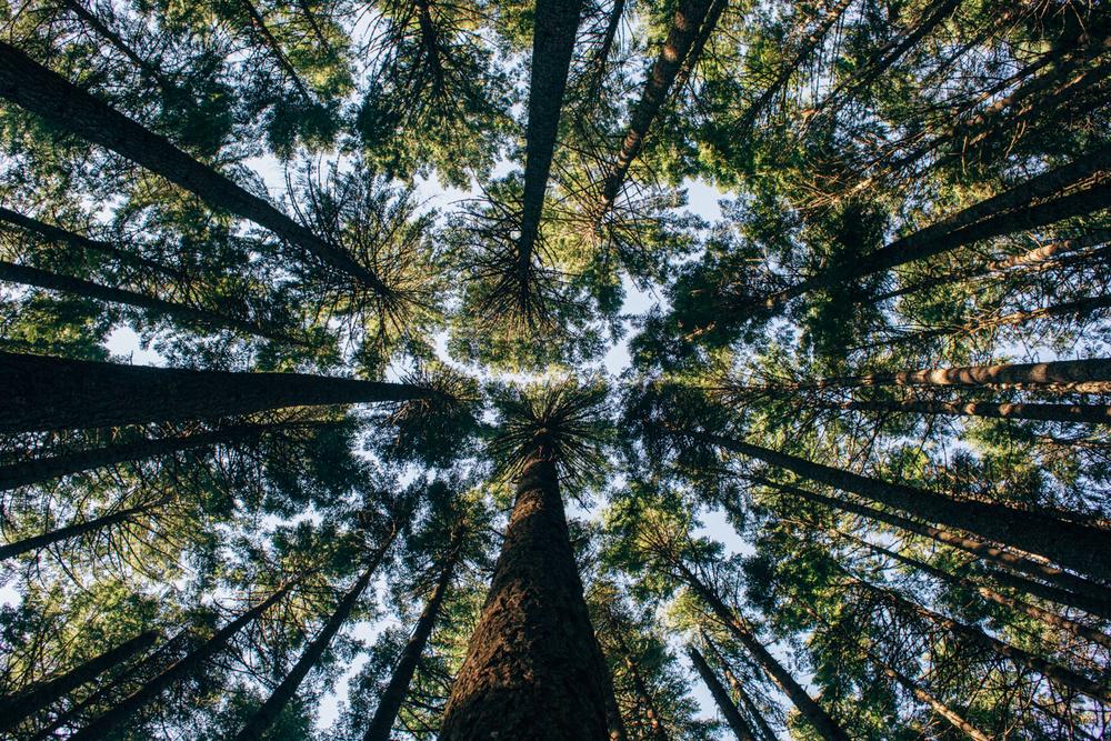 Wyeth Trail 4.26.15-182.jpg