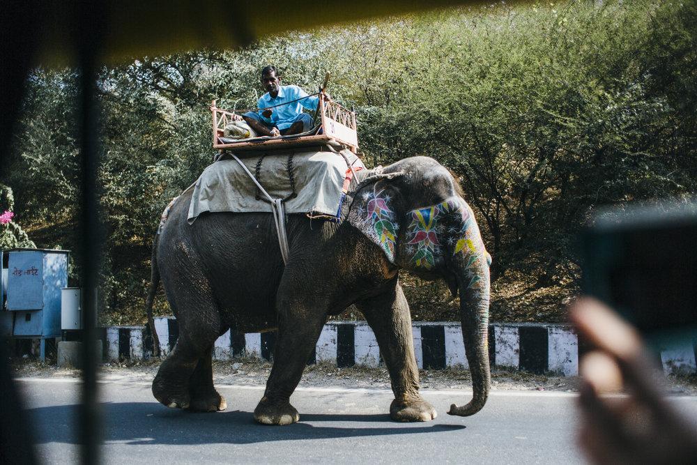 11.4.16 Jaipur 00046.jpg