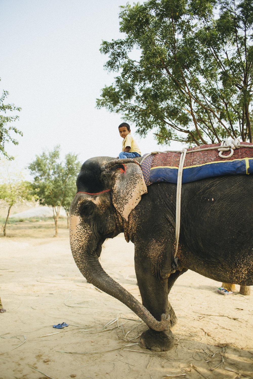 11.4.16 Jaipur 00574.jpg