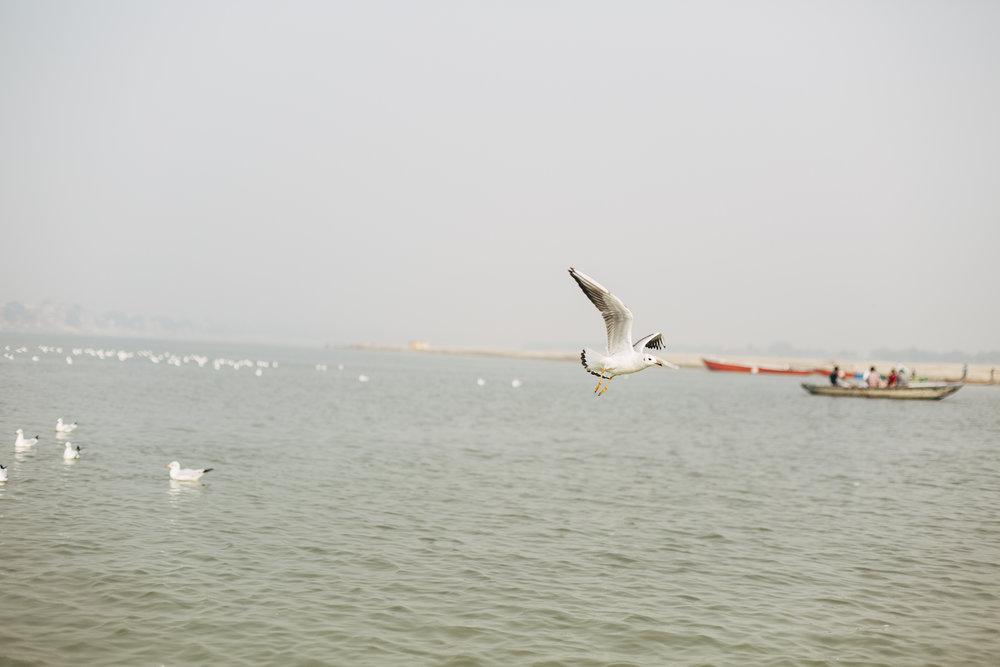 11.21.16 Varanasi 00182.jpg