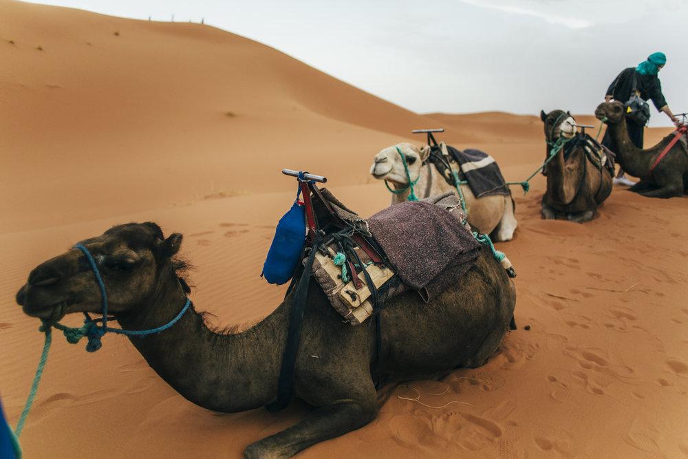 August Morocco Jadan 00139.jpg