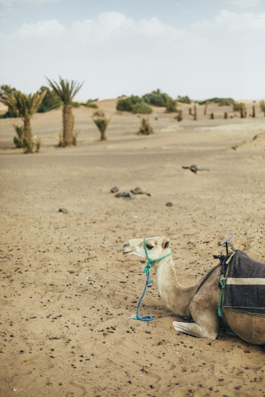 August Morocco Jadan 00180.jpg