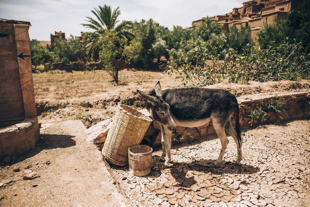August Morocco Jadan 00313.jpg