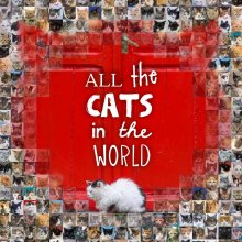 All the Cats in the World $16.95