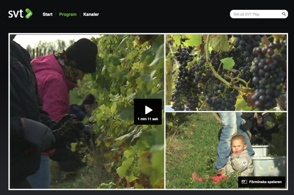 Se vår praktikant från FrankrikeAuriel som berättar för SVT hur konstigt fransmännen tycker det är med vin i Sverige.