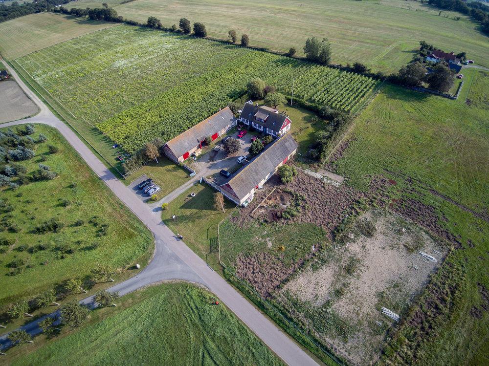 Bild på delar av vår befintliga plantering, samt över de 7 hektar mark som ska planteras.