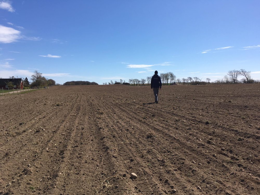 Marken börjar bli redo, flera ton med sten har plockats för hand samt att marken har jämnats med hjälp från lokala jordbrukare.