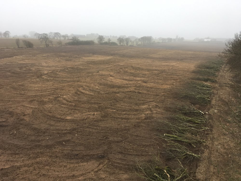 Marken för nyplantering i januari