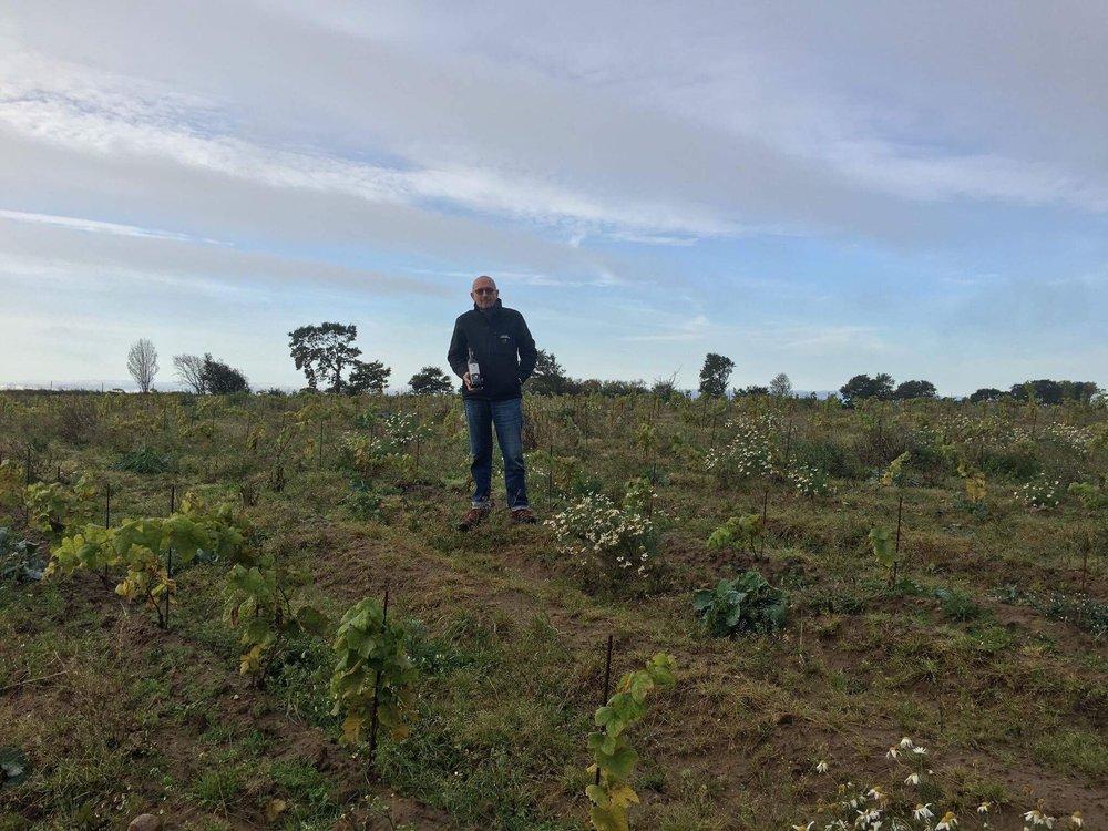 Robert Steidl inspekterar planteringen med Dounauriesling. En sort som är framtagen på Klosterneuburg där Robert är professor