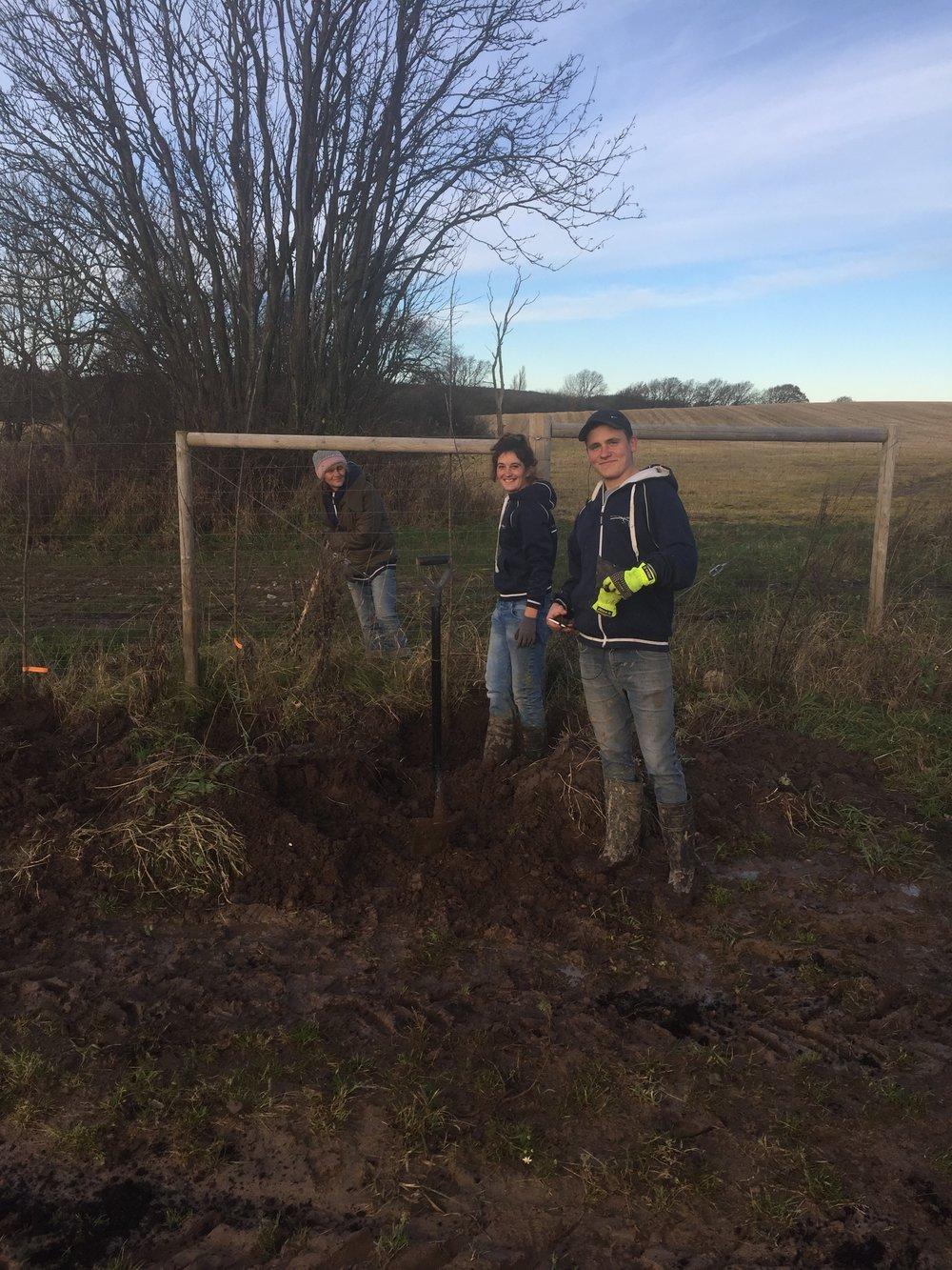 Vi satte 1000 träd runt vingården under November