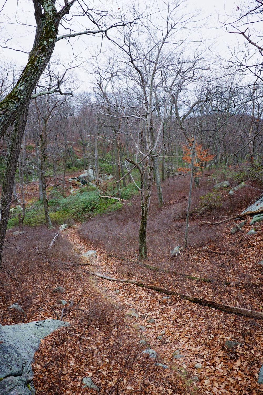 Fall Hiking Trail Harriman State Park