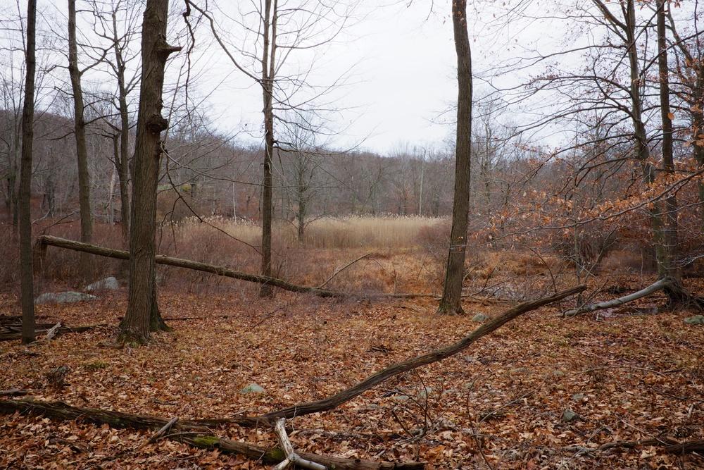 Fall Orange Leaves Harriman State Park