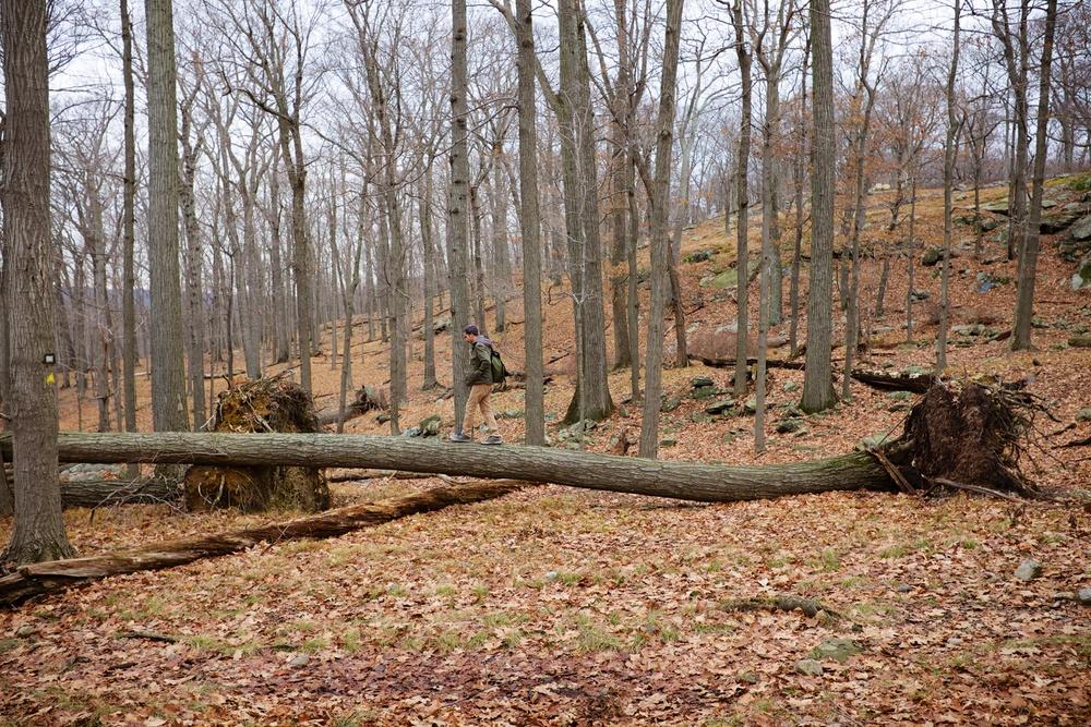 Walking on Fallen Tree Harriman State Park
