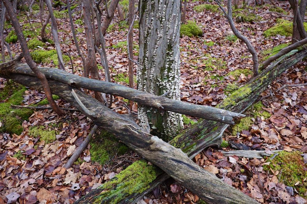 White Mushrooms Harriman State Park