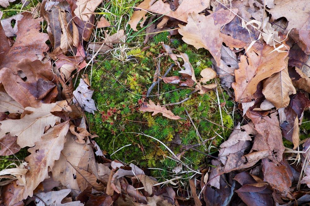 Moss Still Life Harriman State Park NY