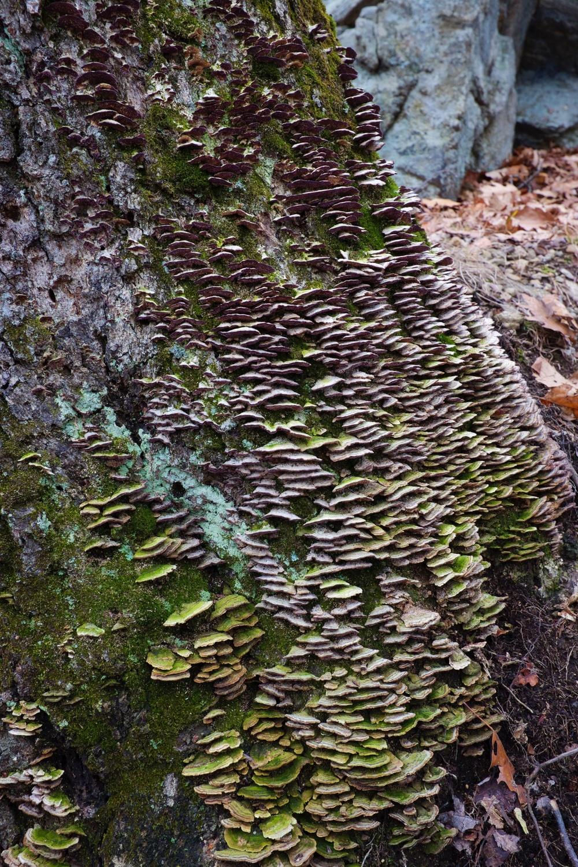 Green Mushrooms Harriman State Park NY