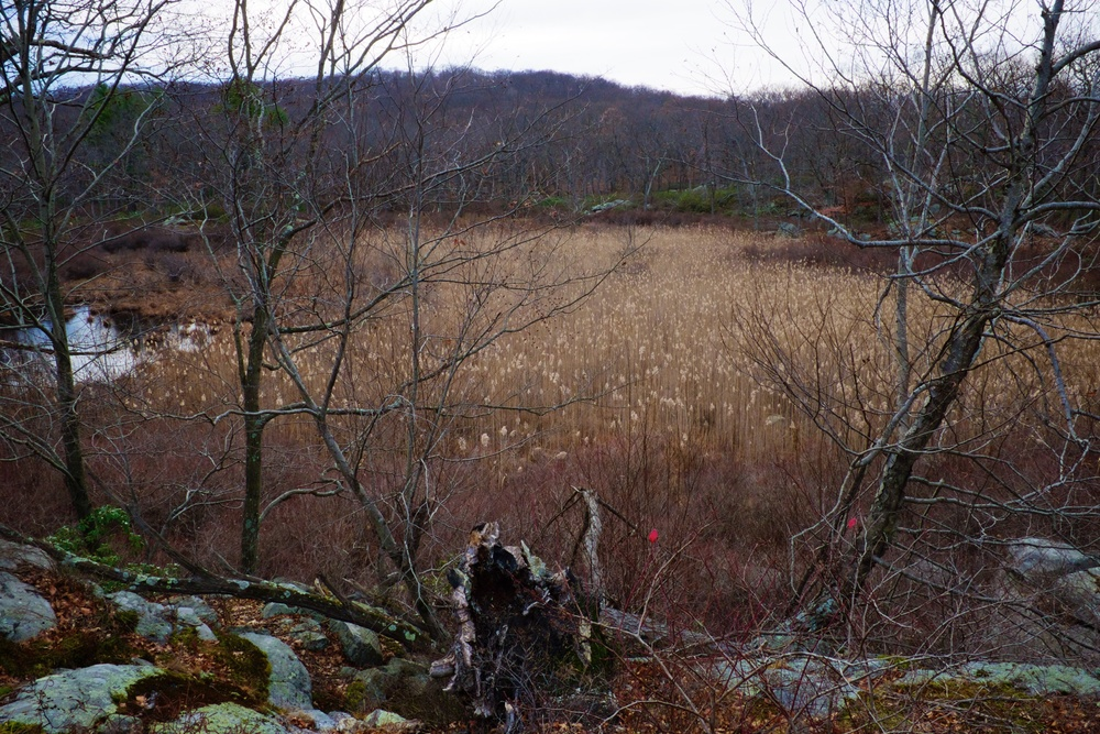 Open Grass Field Harriman State Park NY