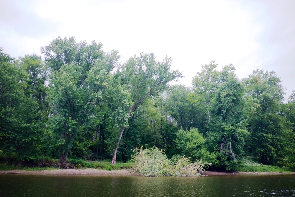 Fallen trees were all along the river banks hit by lightening in summer storms.