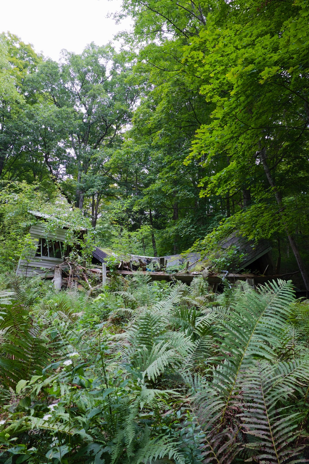 We took a lunch break when I spotted two abandoned cottages in the woods. This one was completely caved in and overgrown with ferns.