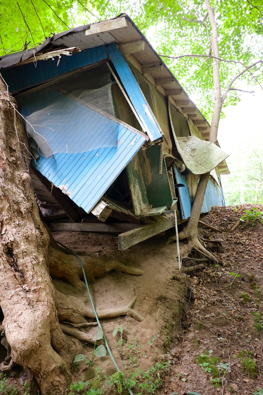 The second cottage was being held up by a large tree gripping the side of a hill.