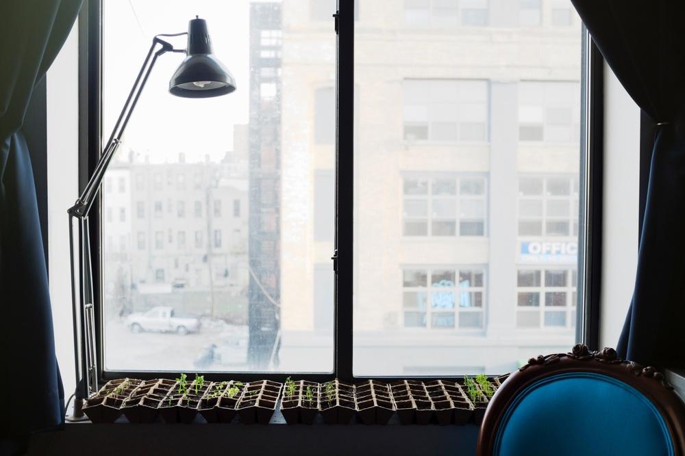 Plants Growing on Windowsill