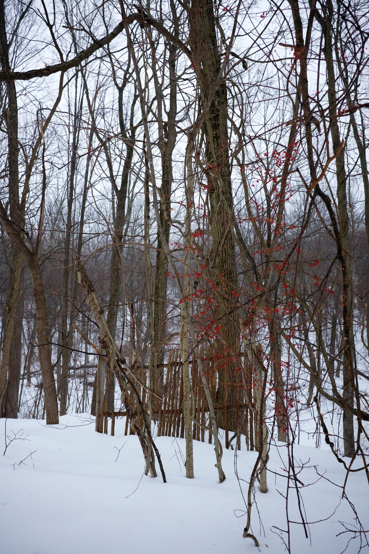 Red Flowers in Snow Jungle Habitat