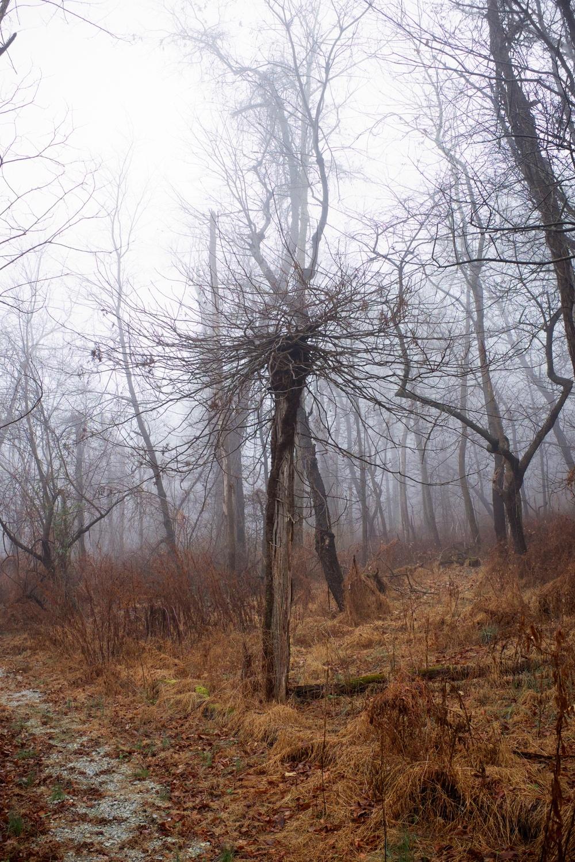 Creepy Tree in Fog