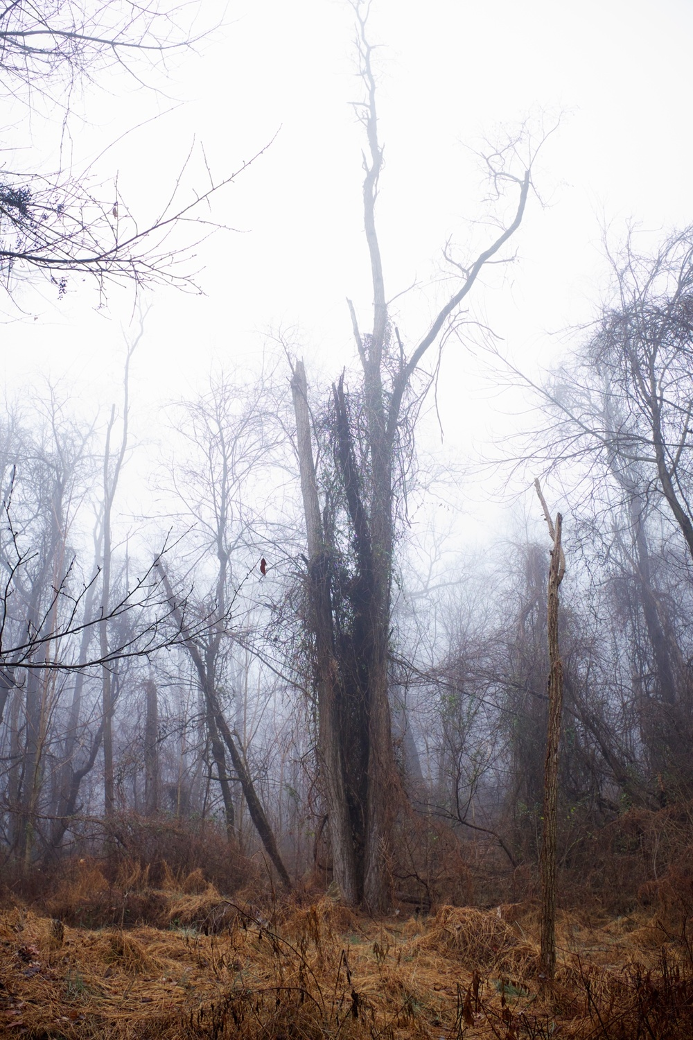 Foggy Forest PA