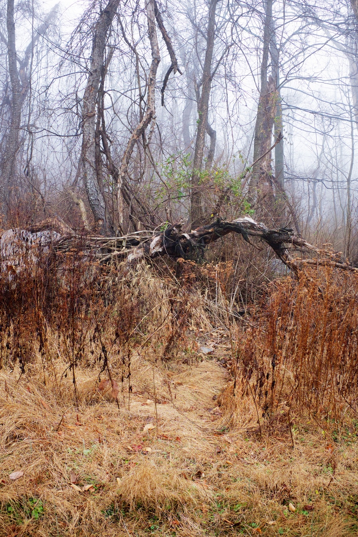 Menacing Forest Tree PA