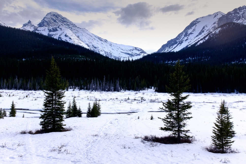 Sunset Valley - Peter Lougheed Provincial Park, Alberta