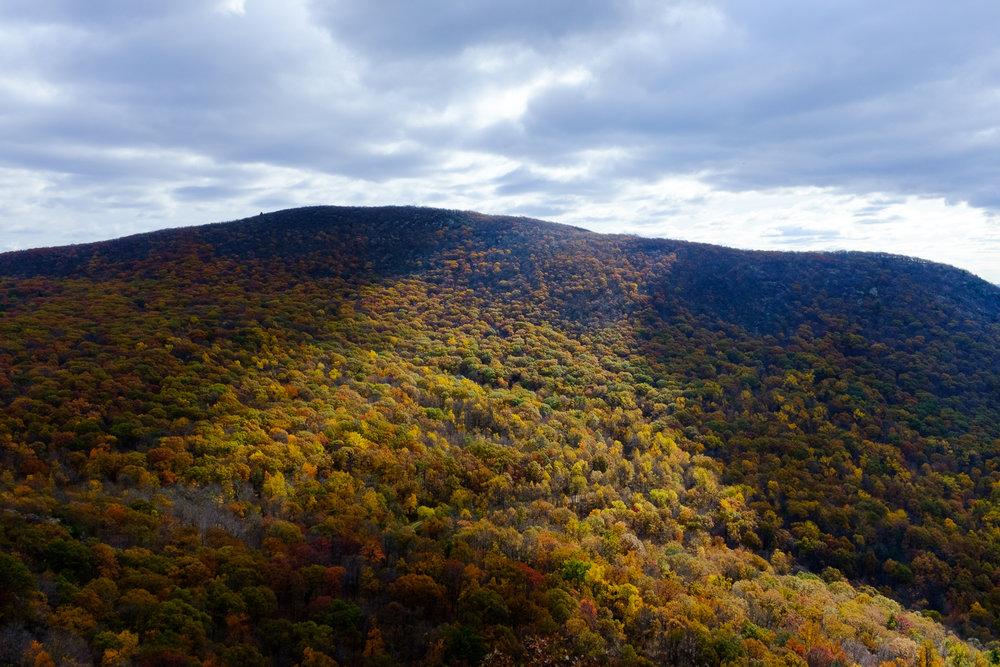 Fall Landscape Art.jpg