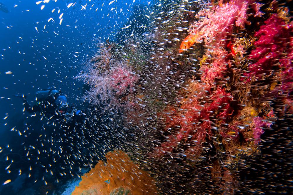 Coral (15).jpg