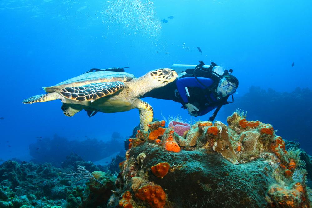Turtles (10).jpg