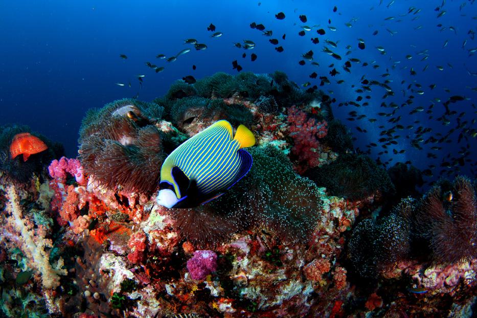 Coral (11).jpg