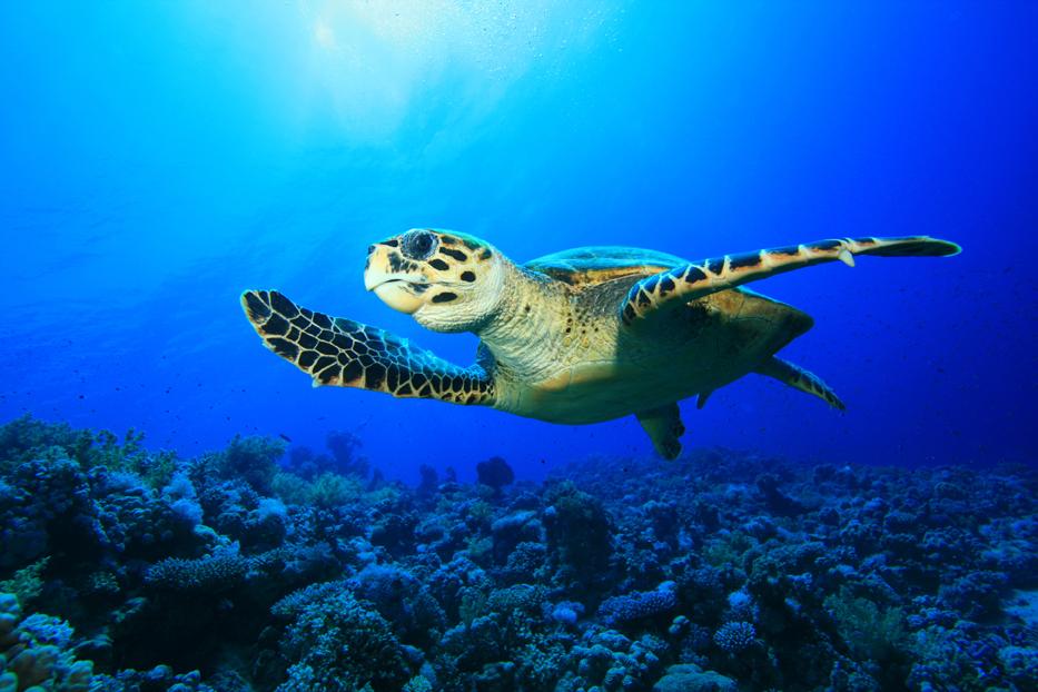 Turtles (5).jpg