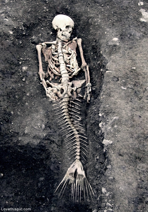 Mermaids Real or Not Real Mermaid Skeleton